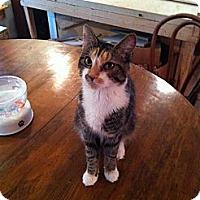 Adopt A Pet :: Gucci - Portland, ME