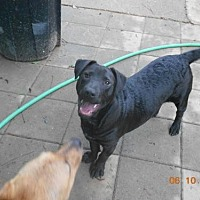 Adopt A Pet :: Kota - Loganville, GA