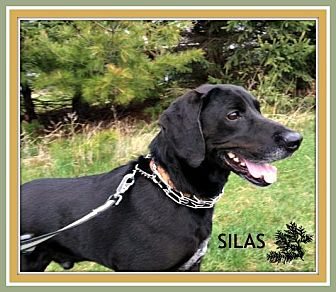 Labrador Retriever Dog for adoption in New Richmond,, Wisconsin - Silas