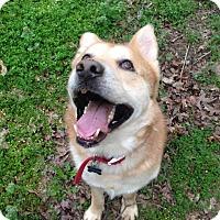Adopt A Pet :: Rock - Alpharetta, GA