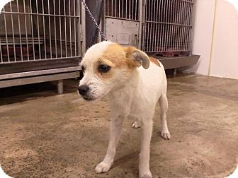Fox Terrier (Toy) Mix Dog for adoption in Upper Sandusky, Ohio - BETTY