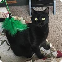 Adopt A Pet :: Ruggles - Alpharetta, GA