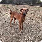 Adopt A Pet :: Rafe
