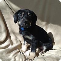 Adopt A Pet :: Adrianna-pending adoption - Manchester, CT