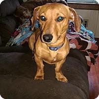 Adopt A Pet :: Bradley #2 in WI - Columbia, TN