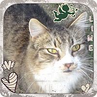 Adopt A Pet :: Lime - Harrisburg, NC