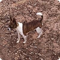 Adopt A Pet :: Barron - Greensboro, GA