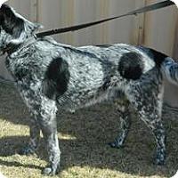 Adopt A Pet :: Patches - Columbus, NE
