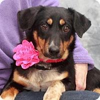 Adopt A Pet :: Meara - Garfield Heights, OH