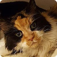 Adopt A Pet :: Jazmin - Grayslake, IL