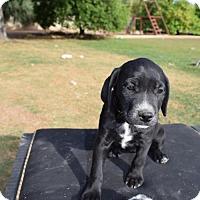 Adopt A Pet :: Cami - Goodyear, AZ