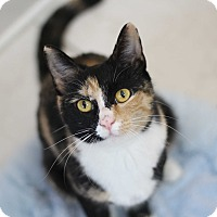 Adopt A Pet :: Mitzi - Richmond, VA