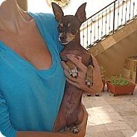 Adopt A Pet :: Petunia - Los Angeles, CA