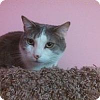 Adopt A Pet :: Corey - Pittstown, NJ
