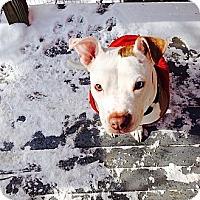 Adopt A Pet :: Nova - Pittsbugh, PA