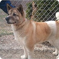 Adopt A Pet :: Sheena - East Amherst, NY