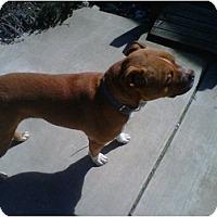 Adopt A Pet :: Clyde - Rancho Cordova, CA