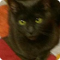 Adopt A Pet :: Bebe - East Meadow, NY
