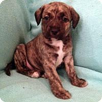 Adopt A Pet :: Christopher - San Francisco, CA