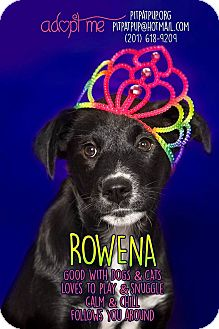 Labrador Retriever Mix Puppy for adoption in Lyndhurst, New Jersey - Rowena