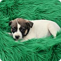 Adopt A Pet :: Berry - Groton, MA