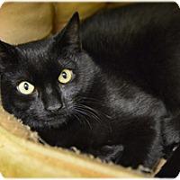 Adopt A Pet :: Peter - Milford, MA