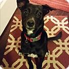 Adopt A Pet :: Midge