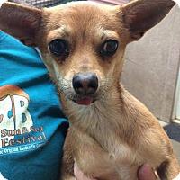 Adopt A Pet :: Buddy($150) - Redding, CA