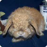 Adopt A Pet :: Mr. Gordy - Alexandria, VA
