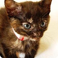 Adopt A Pet :: Eve - Toccoa, GA