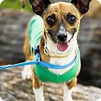 Adopt A Pet :: Dominique - Fresno, CA