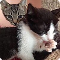 Adopt A Pet :: Dallas - East Hanover, NJ