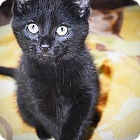 Adopt A Pet :: Reggie - Xenia, OH