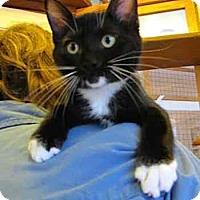 Adopt A Pet :: Roscoe - Davis, CA