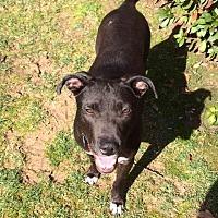 Adopt A Pet :: Mulan - Alpharetta, GA
