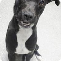 Adopt A Pet :: Skyler - Lincolnton, NC