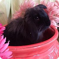 Adopt A Pet :: Midnight - Warwick, NY