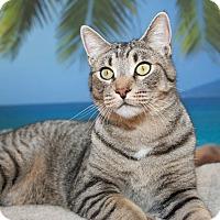 Adopt A Pet :: Peanut - Coronado, CA