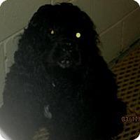 Adopt A Pet :: Buck - Kannapolis, NC