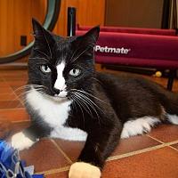 Adopt A Pet :: Frieda - Des Moines, IA