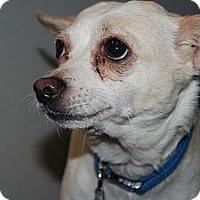 Adopt A Pet :: Cherish - Ogden, UT