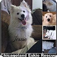 Adopt A Pet :: Jessie & Jake - Elmhurst, IL