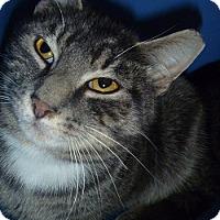 Adopt A Pet :: Pillow - Hamburg, NY