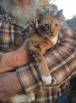 Calico Cat for adoption in Slidell, Louisiana - Callie