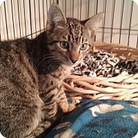 Adopt A Pet :: Snuggles - Santa Monica, CA