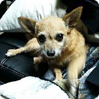 Adopt A Pet :: Bella - Greensboro, GA