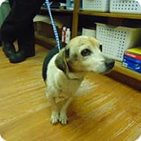 Adopt A Pet :: Patti is a Sweetheart! - Quentin, PA