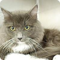 Adopt A Pet :: Donnie - Doglike Lovebug! - Arlington, VA