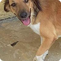 Adopt A Pet :: Lora - Littleton, CO