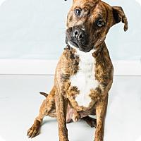 Adopt A Pet :: Taye - Hendersonville, NC